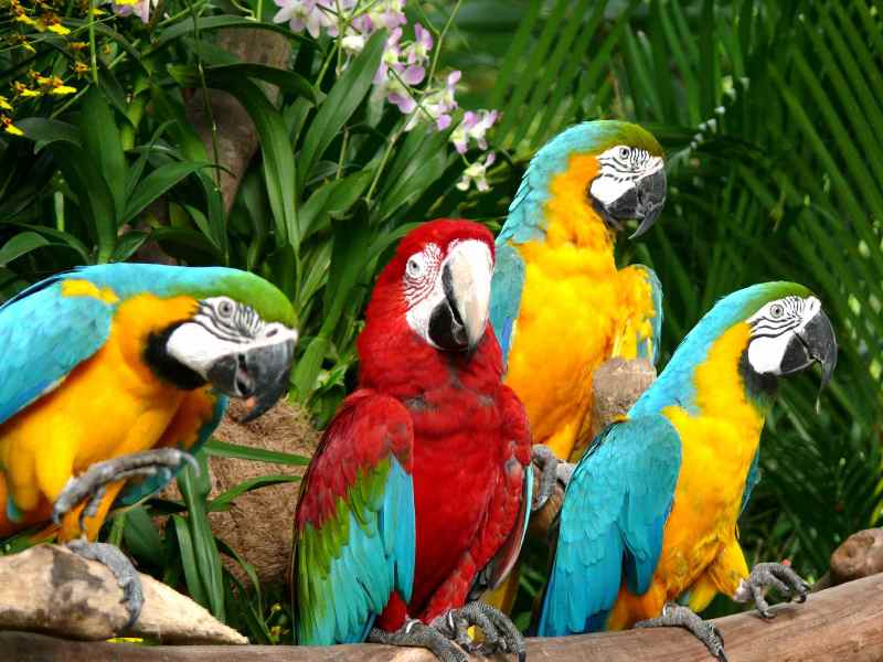 Colourful parrots at Jurong Bird Park