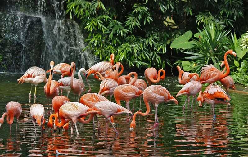The flamingo lake in Jurong BirdPark, Singapore